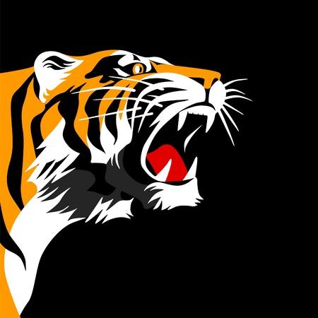 agression: T�te de tigre