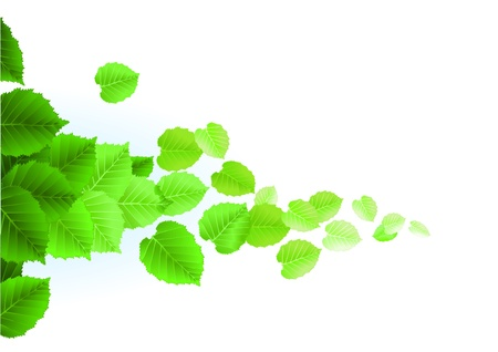 green environment: Fresh leaves on white background