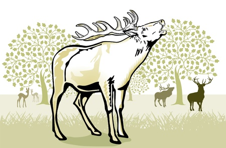 wildlife shooting: deer in the rut Illustration