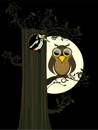 woodpecker: Owl in the night