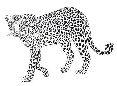 Leopart black on a white background