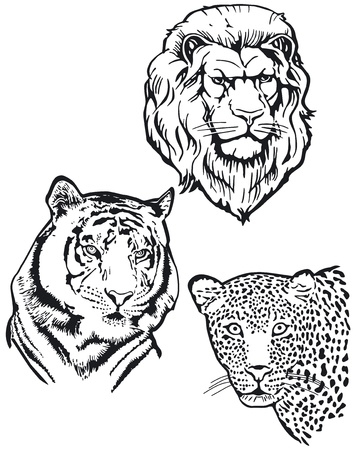 Three Predators, Lion, Tiger, Leopart Vector