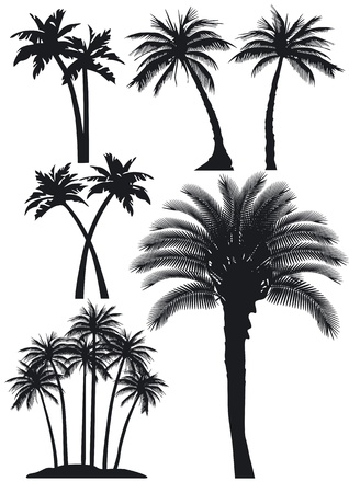 coconut palm: palm trees set Illustration