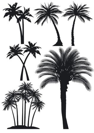 Palme impostato Archivio Fotografico - 10697013