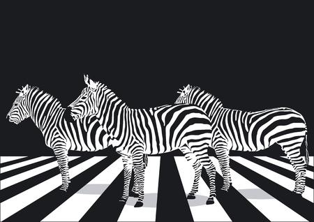 Zebra on pedestrian crossing Vector