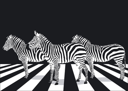 Zebra on pedestrian crossing