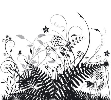 ferns: Las plantas y los helechos Vectores