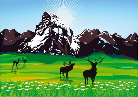 Mountain scenery with wild Stock Vector - 11485614
