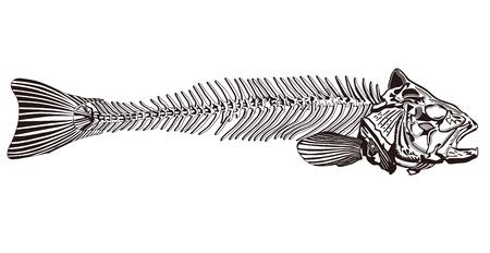 skeleton of fish: espina de pescado