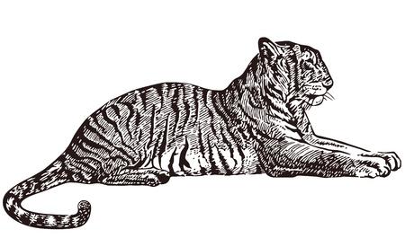 tigresa: Tigre tumbado Vectores