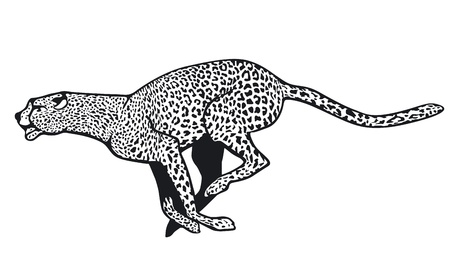 quickness: cheetah Illustration