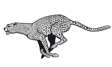 cheetah Ilustracja