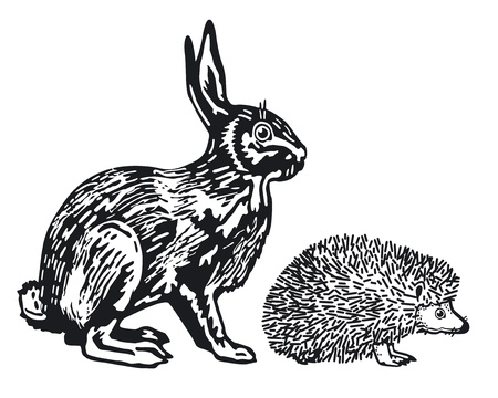 hedgehog: Hare and Hedgehog Illustration