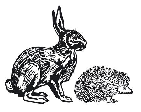 hare: Hare and Hedgehog Illustration