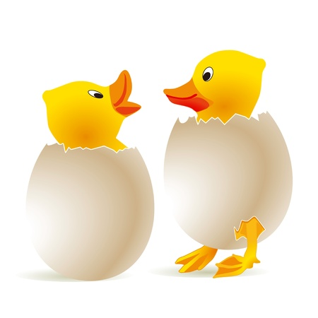 Chick in Egg Vector