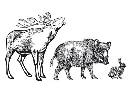 sanglier: animaux de la forêt Illustration