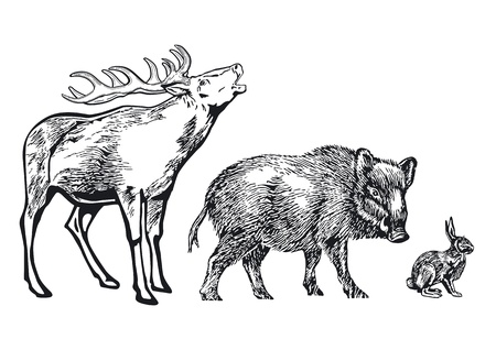 wildschwein: Tiere des Waldes Illustration
