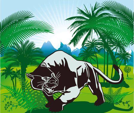 jaguar: Selva y Panter Vectores
