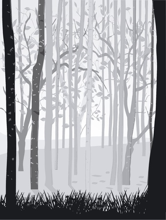 birch forest: Black Forest White Illustration