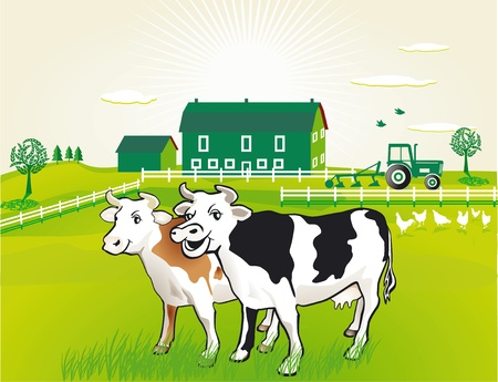 cows grazing: Cows on pasture Illustration