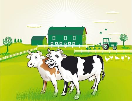 boeufs: Les vaches au p�turage Illustration