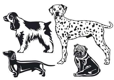 dalmatian puppy: breeds of dogs