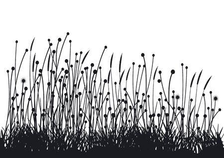 grasses: grasses