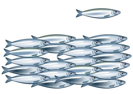 Sardine shoal Stock Vector - 12062417