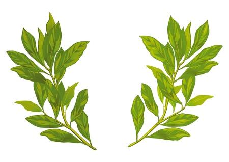 laurel leaf: hojas de laurel