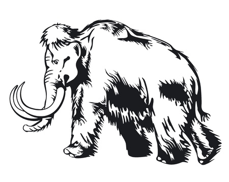 mammoth: mammoth Illustration