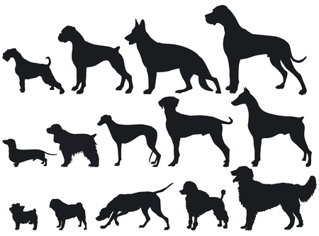 Dogs and Dog Breeds Vector