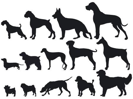 cocker: Hunde und Hunderassen