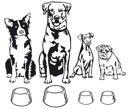 pinscher: four dogs with food bowl