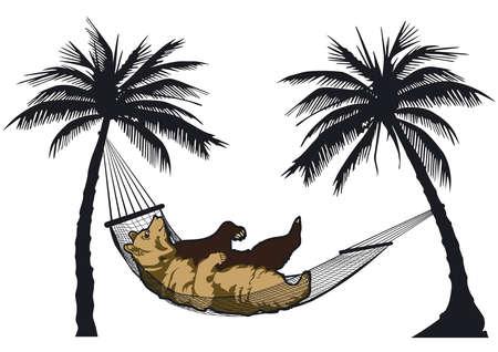 Bear in a hammock Vector