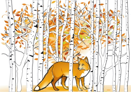 birch forest: Fox in the forest