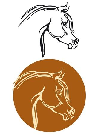 paardenhoofd: Volbloed paard het hoofd Stock Illustratie