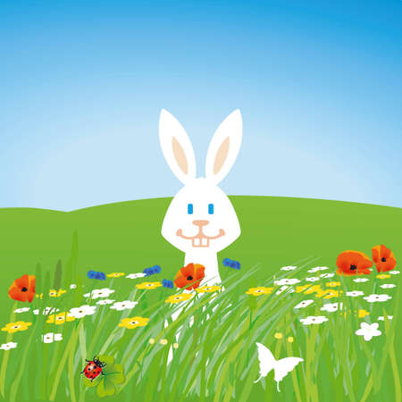 Rabbit on the meadow  Vector