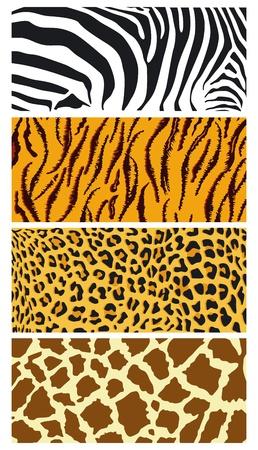 leopard: fur coat Illustration