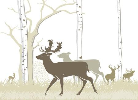 damhirsch: Damwild und Rotwild Illustration