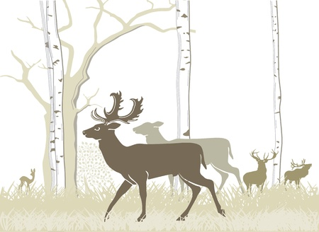 Fallow deer and red deer Stock Vector - 13152826