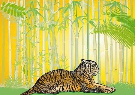 Asian Tiger in the jungle Stock Vector - 13293095