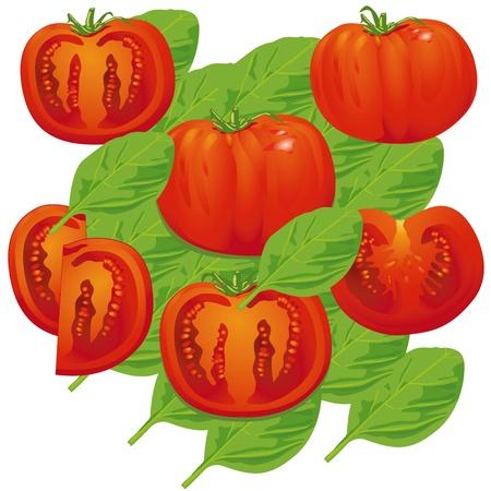 basil: tomato basil Illustration