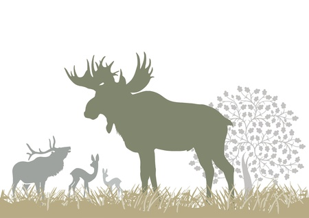 alce: Elk e animali selvatici