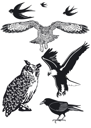Owl, Swallow, Raven Vector