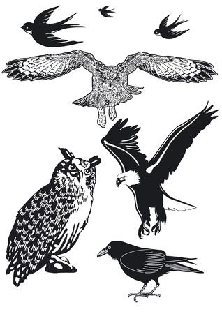 Owl, Swallow, Raven Illusztráció
