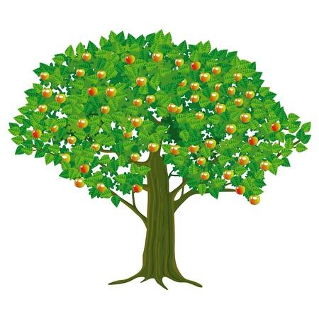 arbol de manzanas: Gran Manzano Vectores
