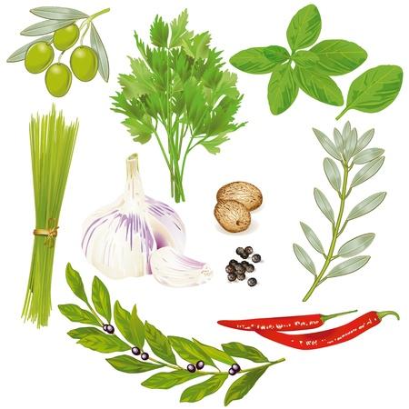 петрушка: Специи и травы Иллюстрация