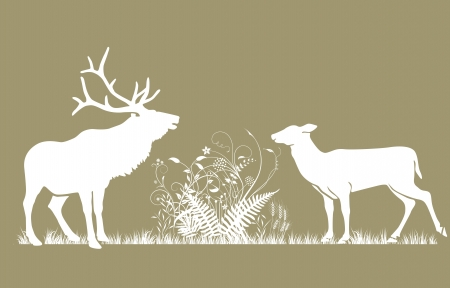fawn: Deer and doe