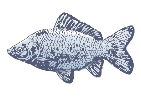 fishing lure: Carp Illustration