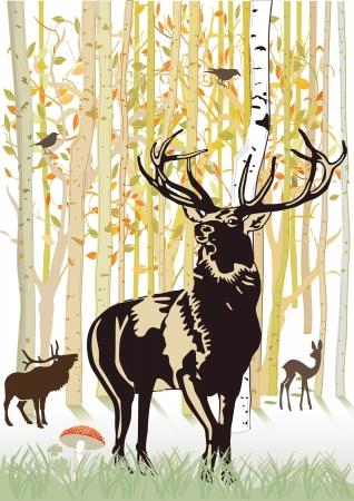 Cerfs communs dans la forêt d'automne